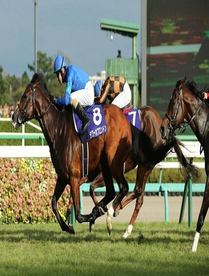 horse racing syndicates